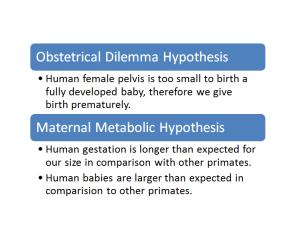 obstetrical dilemma vs maternal metabolic